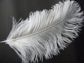 witte, lange struisvogel veer