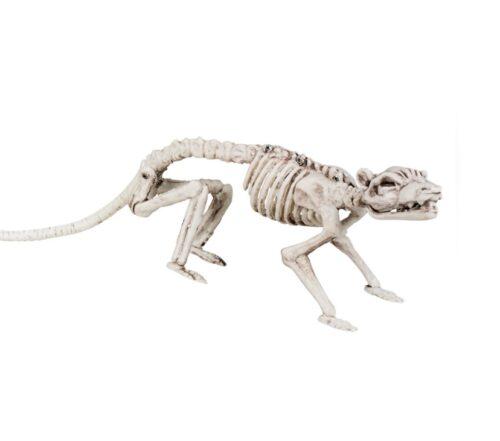 Steampunk ratten skelet Silas